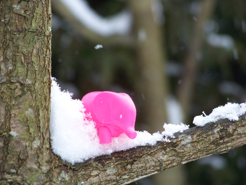 Pink ellie in the snow