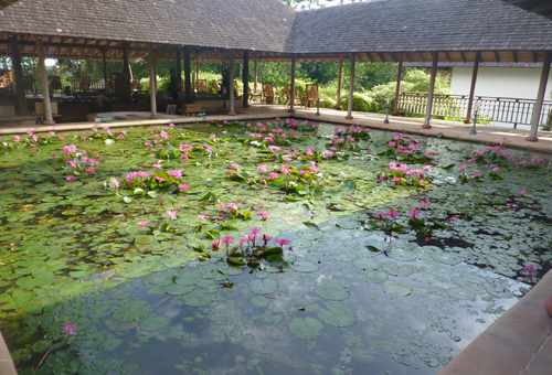 The beautiful lily pond full of singing frogs in the lobby