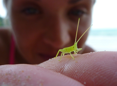 A cute little insect I met