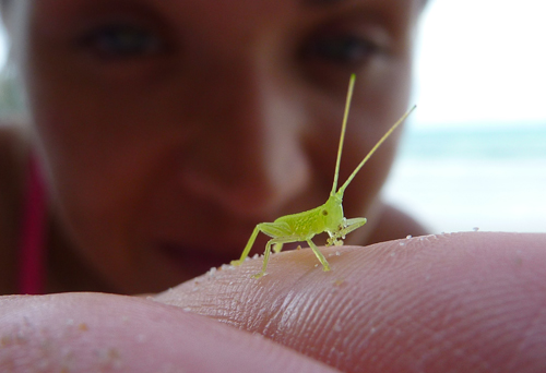 A little insect I met