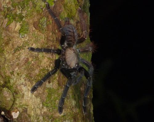 A tarantula!