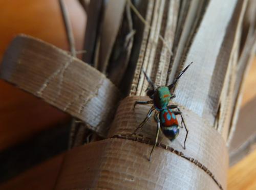 A wierd spider